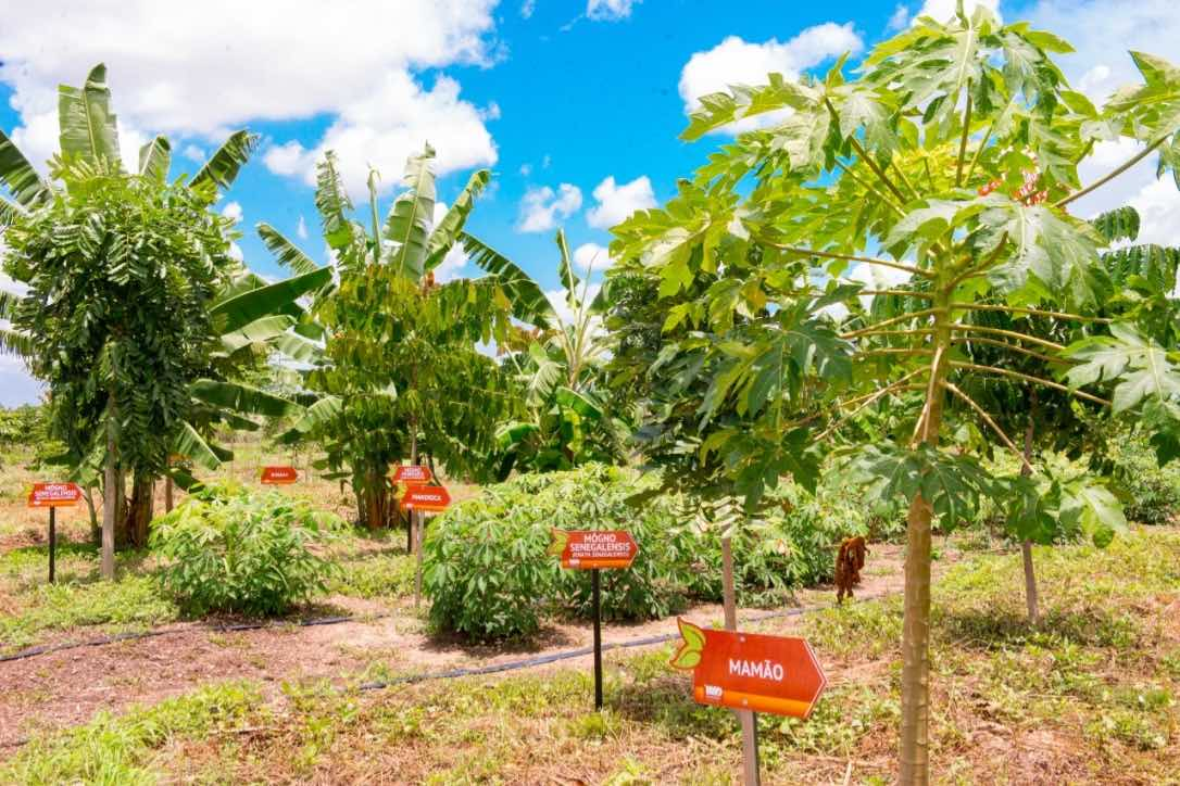 Opening of the 1st Agroforestry