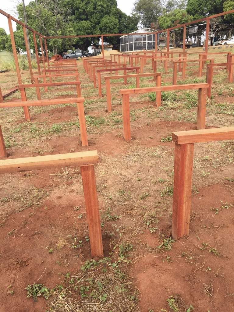 First African mahogany nursery