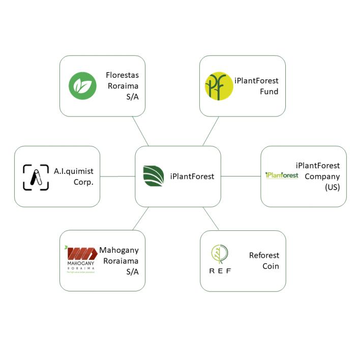 quadrado-organzação-iplant-forest